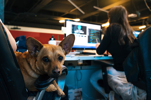 Dog friendly working space